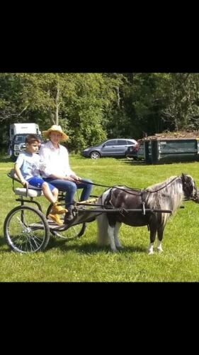 Ponycart-IMG 2728
